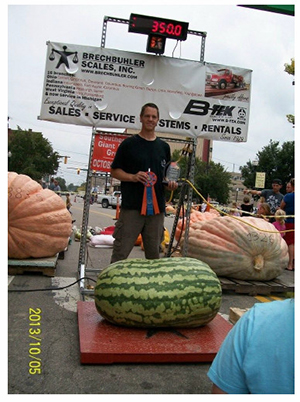 Giant Gardening - kent Watermelon